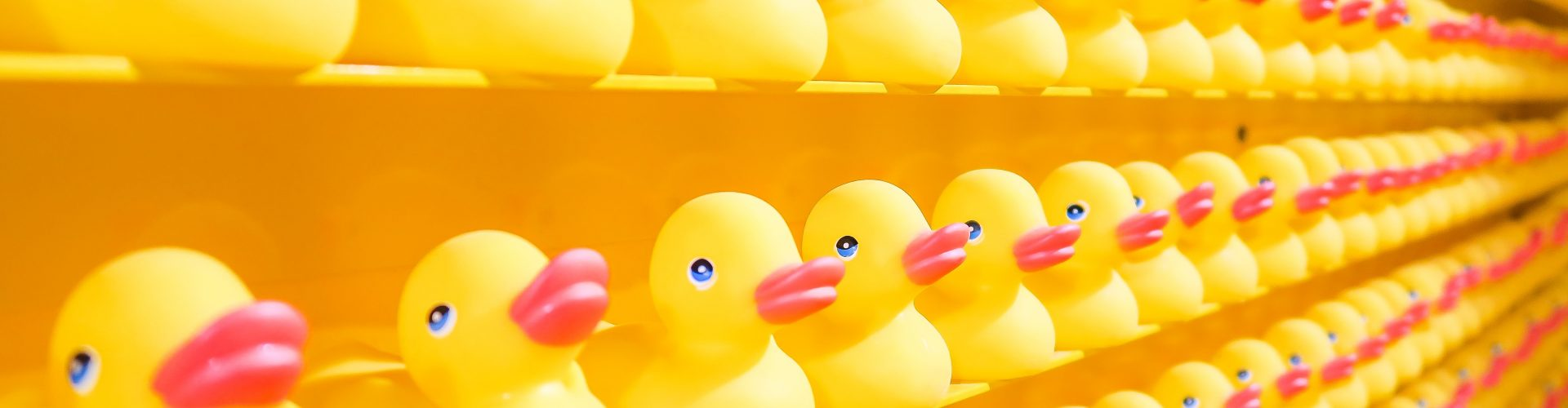 rows of rubber ducks