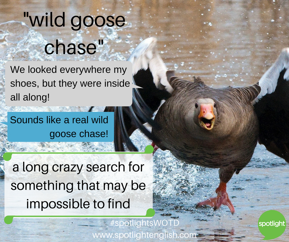 wild goose chase graphic